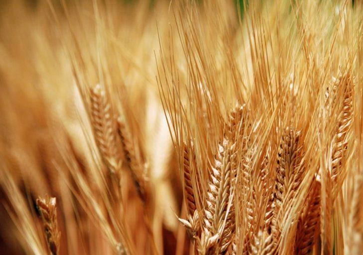 8 أكتوبر 2000 إقرار قانون حماية المستنبطات النباتية